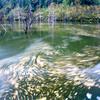 秋流れる池