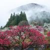 里山が美しく飾られる頃