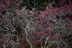 蕾と枝の造形