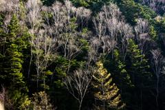 冬に向かう木々達