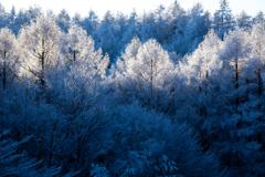 霧氷の森に光さす