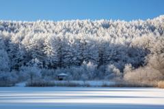 冬の湖畔にて