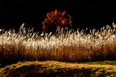 晩秋の夕日浴び