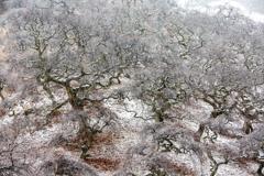 妖怪森の美しい季節