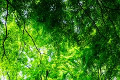 重なり合う緑