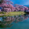 ピンク映える春