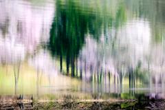 湖面に春を描く1