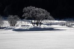 雪原の樹形
