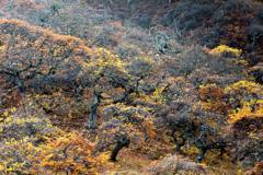 妖怪の森の秋