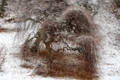 化粧する木