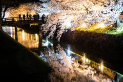 お堀桜見物