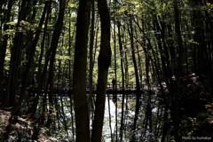 美人林に誘われて