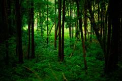森の中の陽だまり