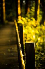 夕焼け小道
