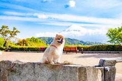 富士川SAからの富士山とポメラニアン