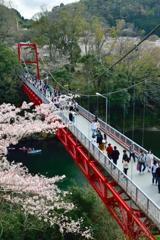 笠岩橋と桜 -1st-