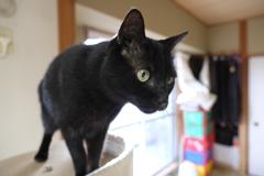 猫の日三連投-ルナ-