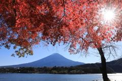 河口湖北岸より富士