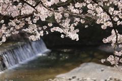 渓流にも春
