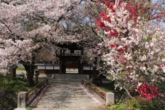 お寺さんに春