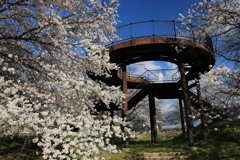 桜公園・2