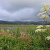 夏の湿原・1