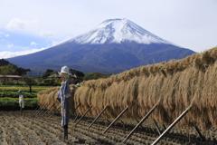 富士山麓の美味しいお米