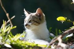 野良の子ネコ6