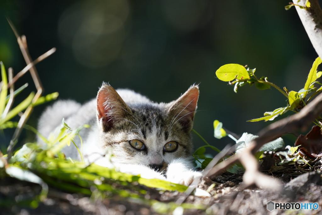 野良の子ネコ4