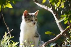 野良の子ネコ2
