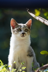 野良の子ネコ1