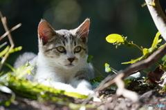 野良の子ネコ5