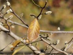 秋の里山で4