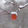 冬の林檎園で