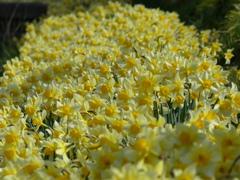 春8(春の花2)