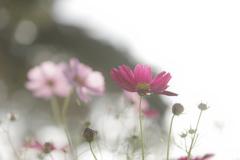 光溢れ 花咲き乱れ