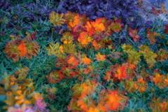 花という現象