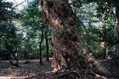 烏森の霊樹