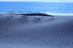浜辺はブルー