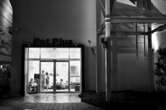 夜のペットショップ
