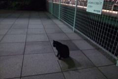 夜のノラ歩き
