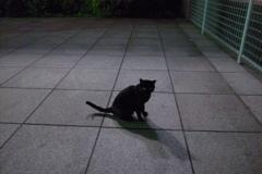 夜のノラ歩き..