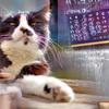 街のチョイ撮りを重ね合せ (多重露光) 猫編
