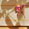 途中下写(5月6日) 花や情景~撮り放題 04