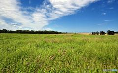 刈り取り前の牧草地