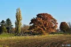 農場の木々
