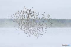 霧立つ湖に舞う
