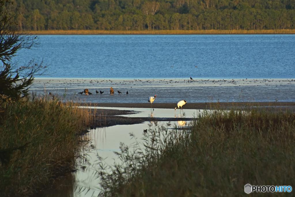河口に集まる鳥たち