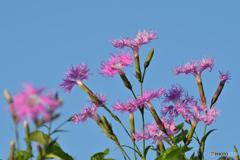 野花の時間