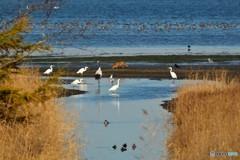 -鳥獣保護区-